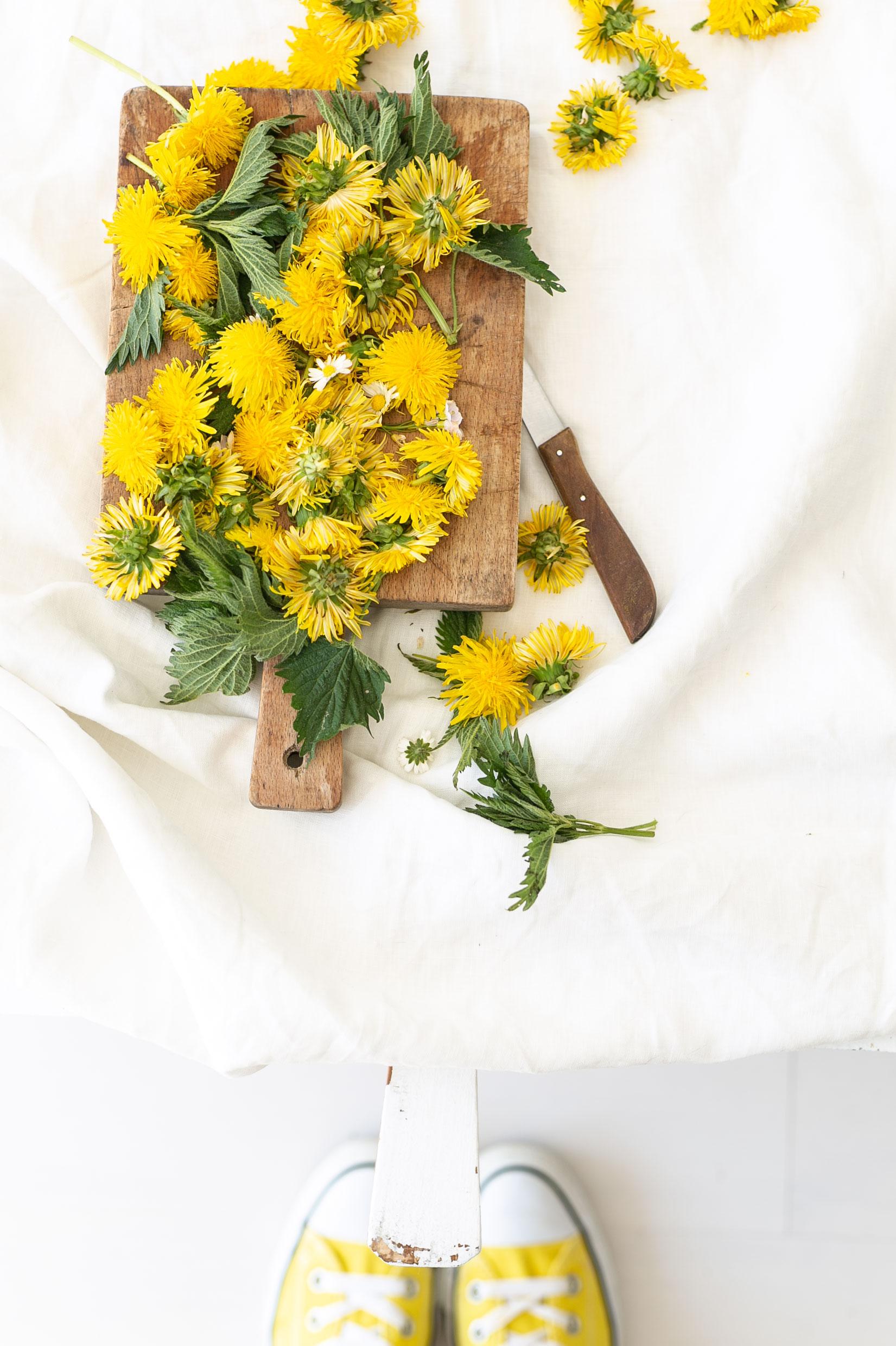 Löwenzahn Blüten für den Löwenzahn Gelee