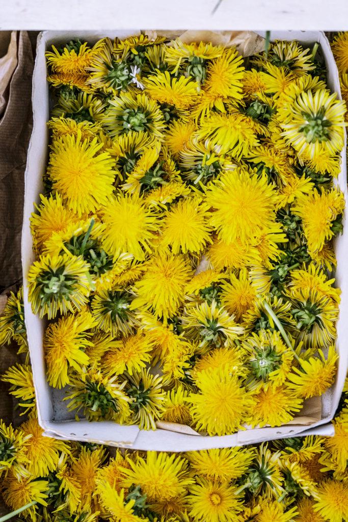 Löwenzahn Blüten für Löwenzahn Gelee