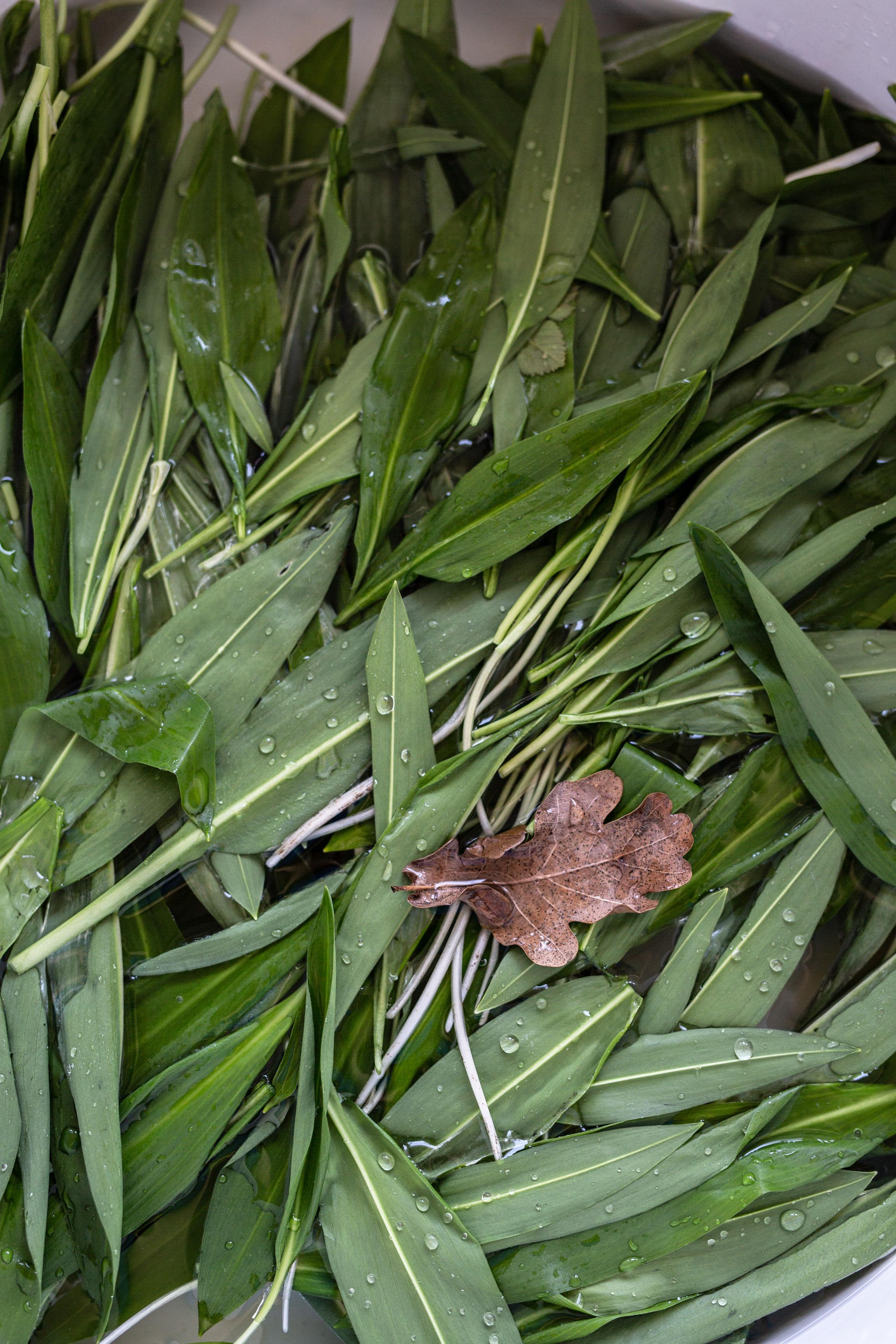 Bärlauch Rezept: Bärlauch fermentieren & haltbar machen | Bärlauchblätter im Wasser | Syl Gervais - Gesunde vegane Rezepte