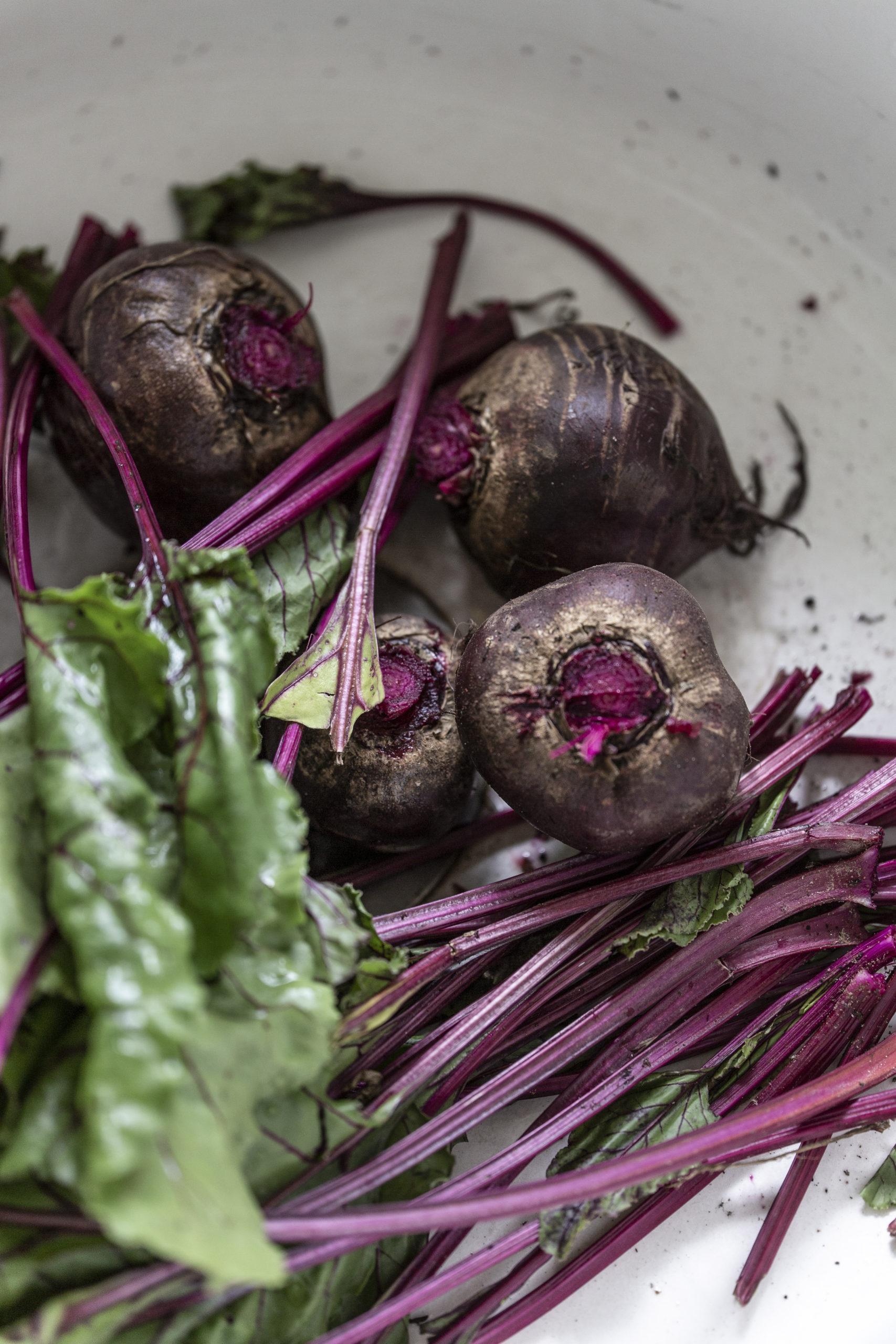 4 Rote Bete Knollen und Blätter in einer Keramikschüssel | Rote Beete fermentieren - Kvass Rezept | Syl Gervais - Gesunde vegane Rezepte