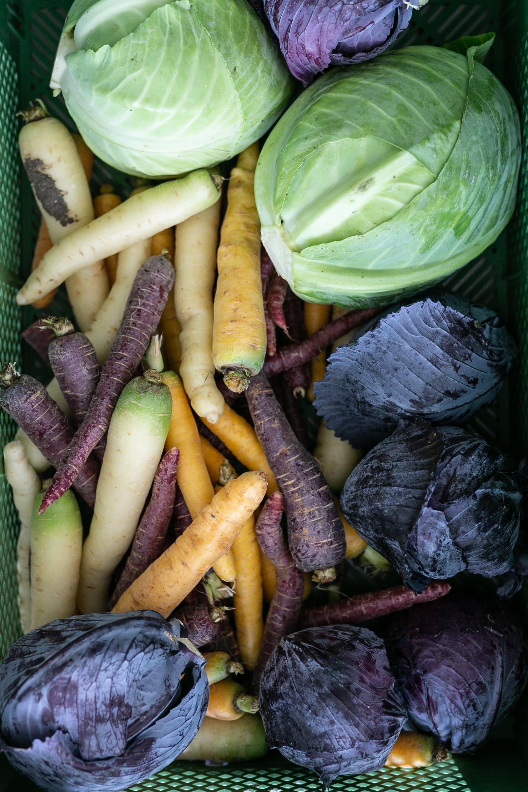 Weißkohl, Rotkohl und Karotten vorbereitet zum Fermentieren