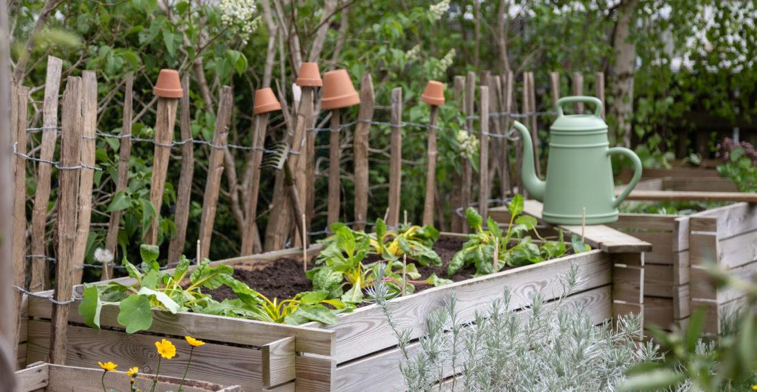 Hochbeet bepflanzen – ein Salat Bowl Beet anlegen | Gesunde vegane Rezepte, Fermentation, Nachhaltigkeit - Syl Gervais