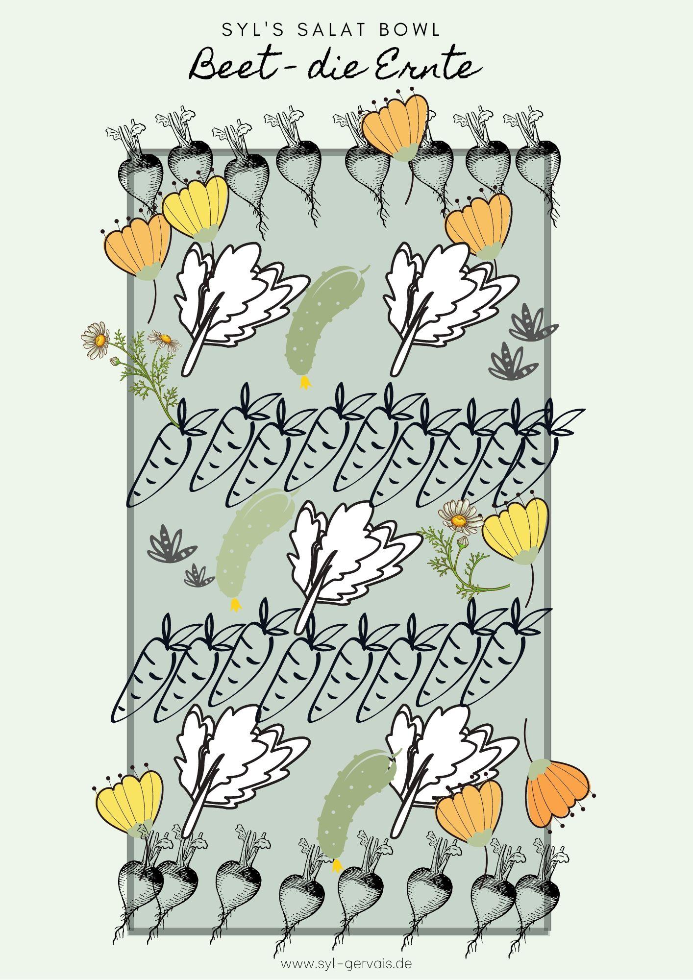 Hochbeet Ernte
