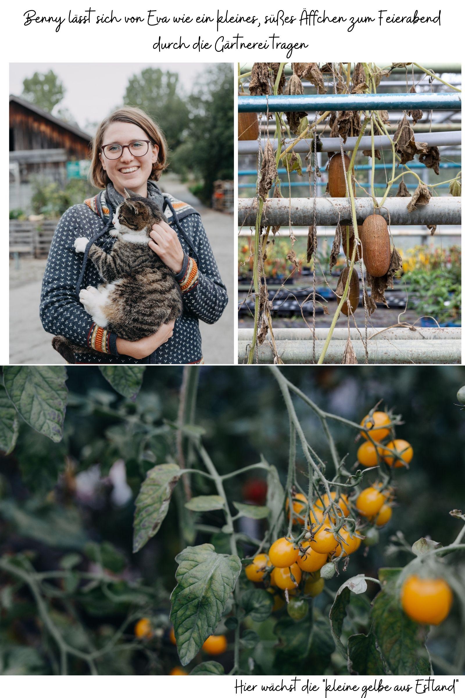 Mit der Natur leben und nicht gegen sie - mein Besuch in der Bio Gärtnerei Herb in Kempten | Gesunde vegane Rezepte, Fermentation, Nachhaltigkeit - Syl Gervais